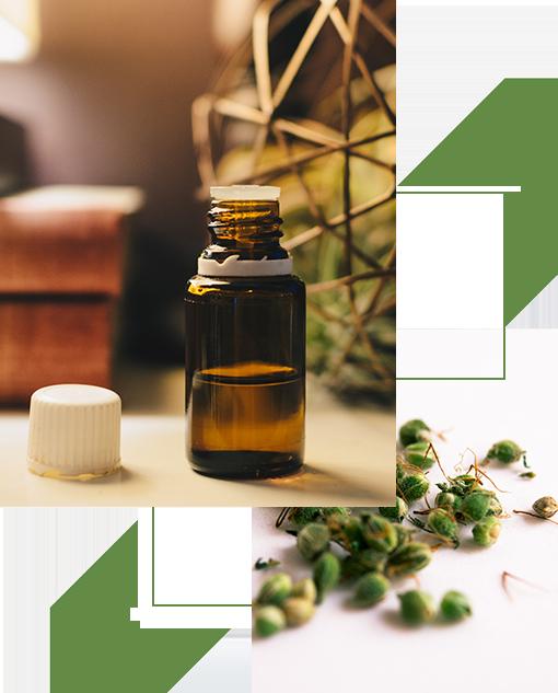 Benefici olio di canapa - Estratti CBD Ecohemp